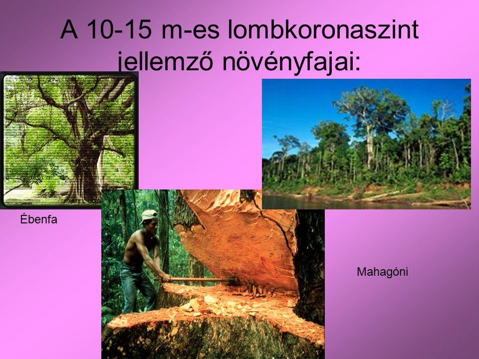 A 10-15 m-es lombkoronaszint jellemző növényfajai:
