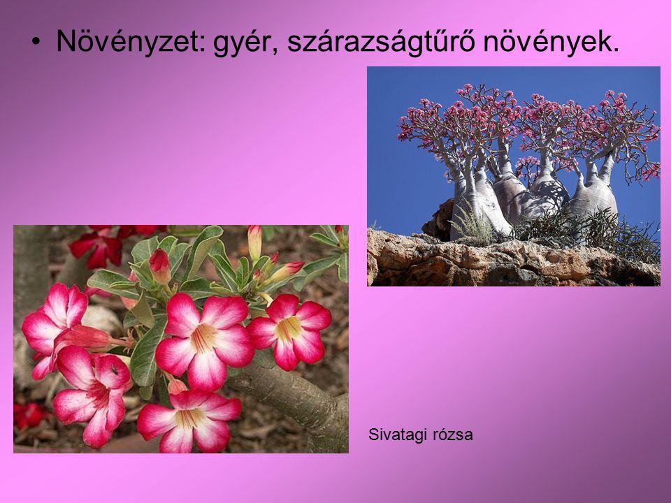 Növényzet: gyér, szárazságtűrő növények.
