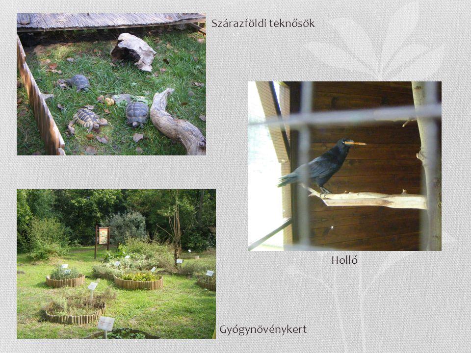 Szárazföldi teknősök Holló Gyógynövénykert