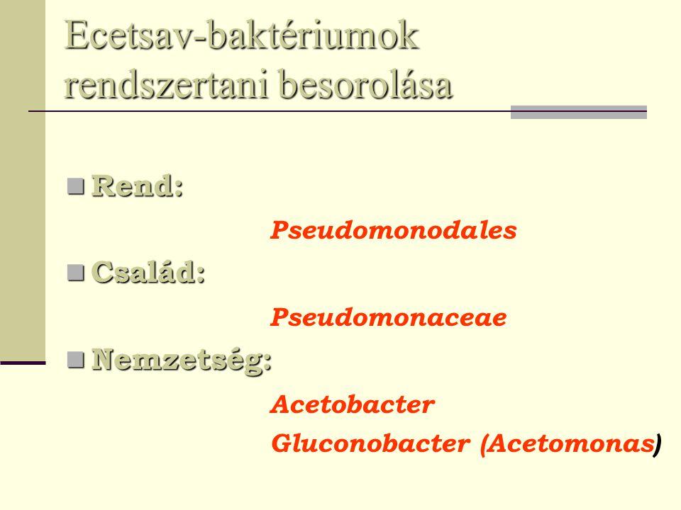 Ecetsav-baktériumok rendszertani besorolása