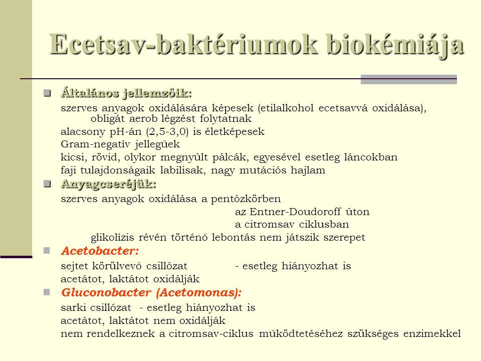 Ecetsav-baktériumok biokémiája
