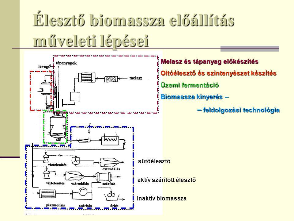 Élesztő biomassza előállítás műveleti lépései