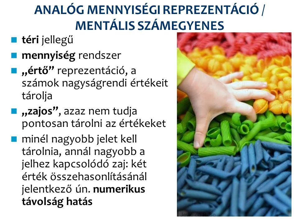 ANALÓG MENNYISÉGI REPREZENTÁCIÓ / MENTÁLIS SZÁMEGYENES