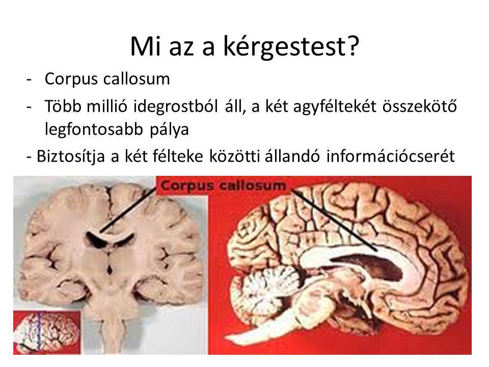 Mi az a kérgestest Corpus callosum