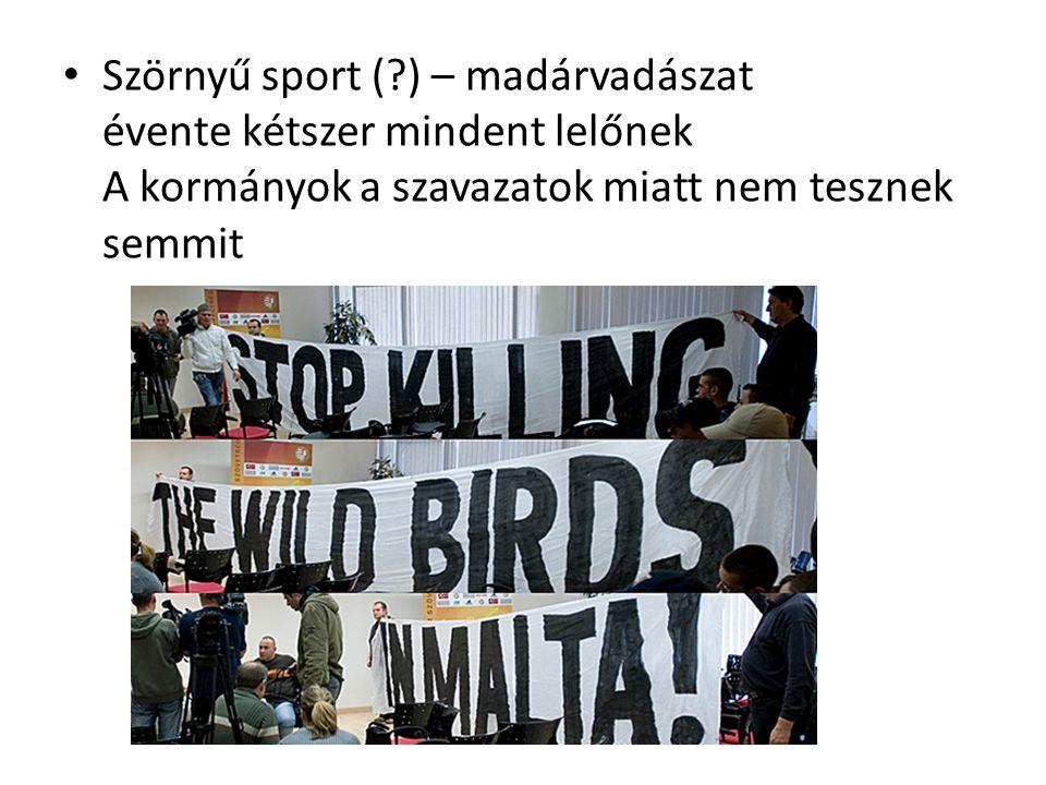 Szörnyű sport ( ) – madárvadászat évente kétszer mindent lelőnek A kormányok a szavazatok miatt nem tesznek semmit