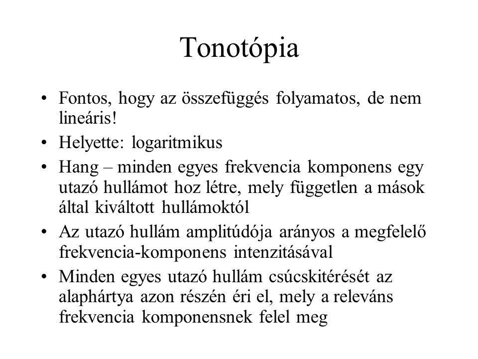 Tonotópia Fontos, hogy az összefüggés folyamatos, de nem lineáris!