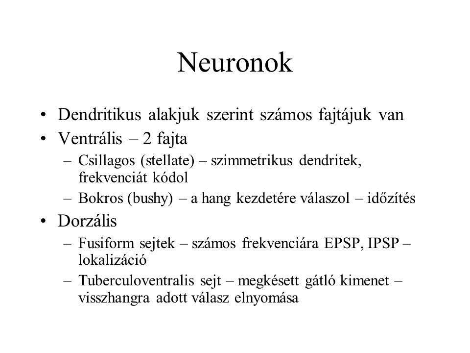 Neuronok Dendritikus alakjuk szerint számos fajtájuk van