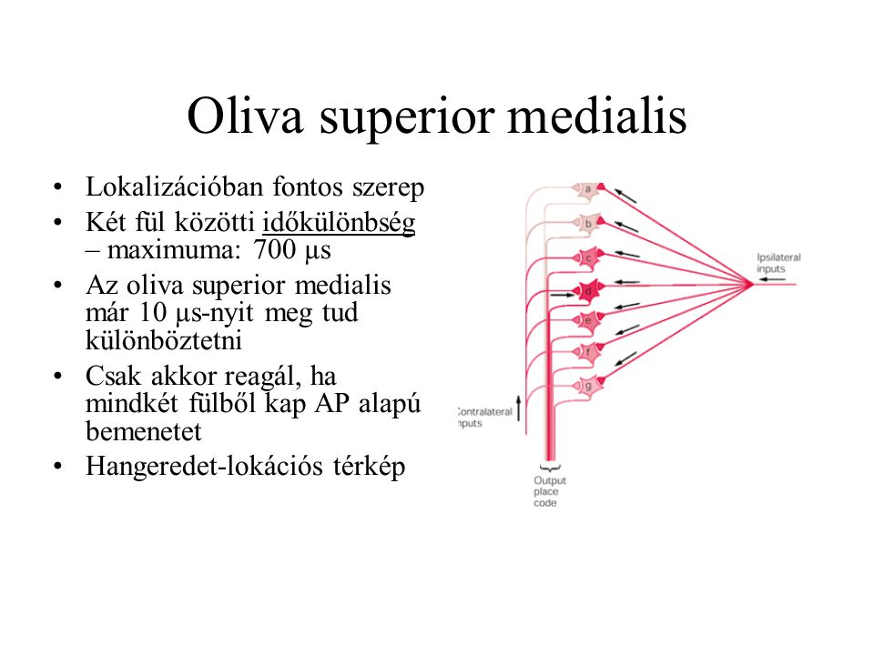 Oliva superior medialis