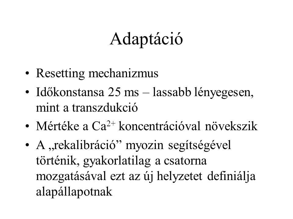 Adaptáció Resetting mechanizmus