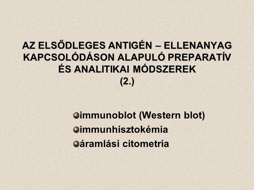 immunoblot (Western blot) immunhisztokémia áramlási citometria