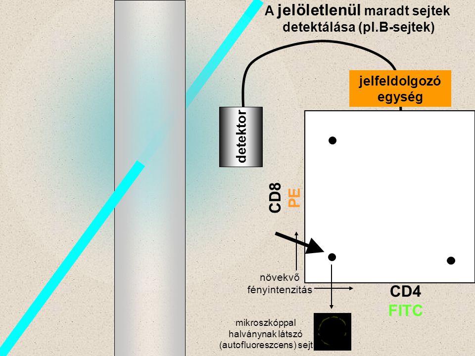 A jelöletlenül maradt sejtek detektálása (pl.B-sejtek)