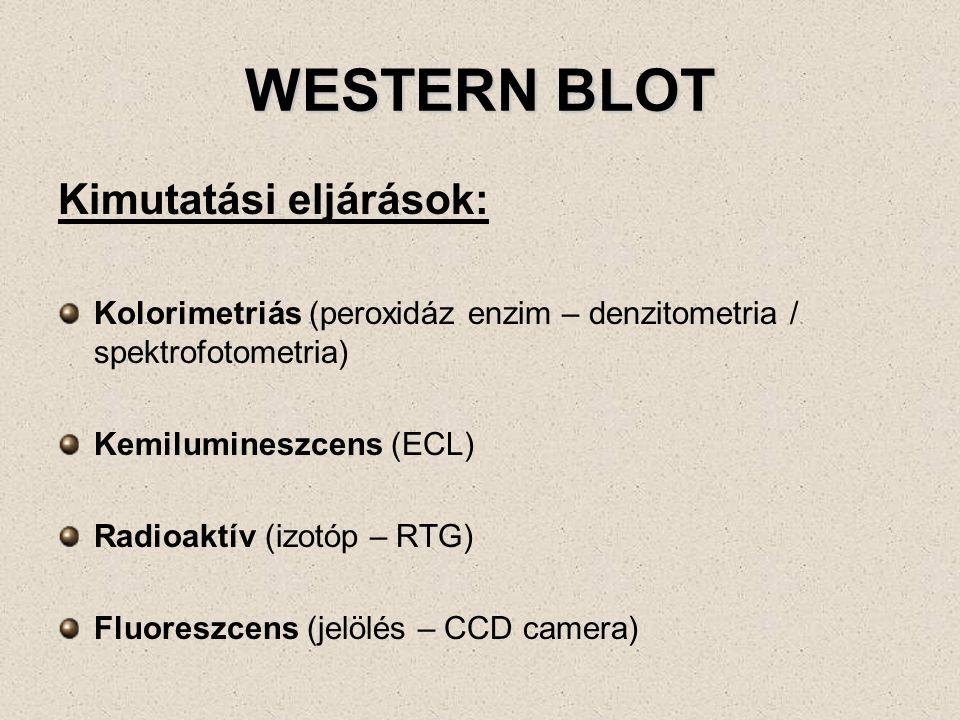 WESTERN BLOT Kimutatási eljárások: