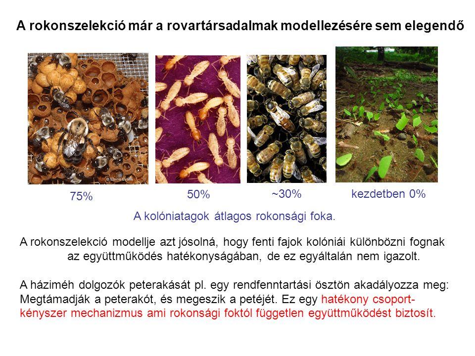A rokonszelekció már a rovartársadalmak modellezésére sem elegendő