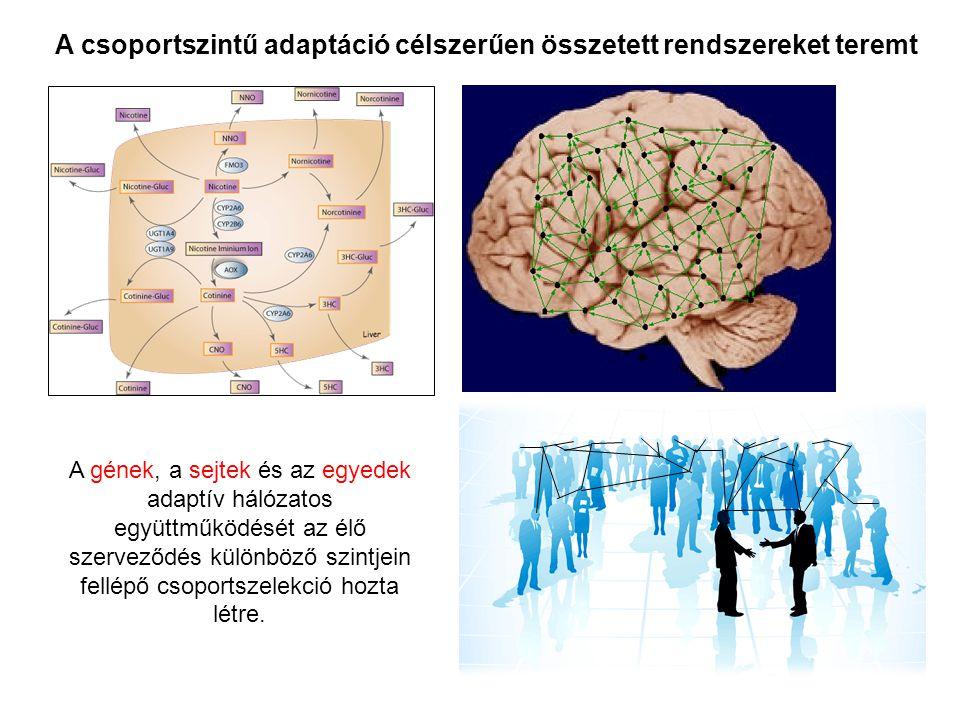 A gének, a sejtek és az egyedek