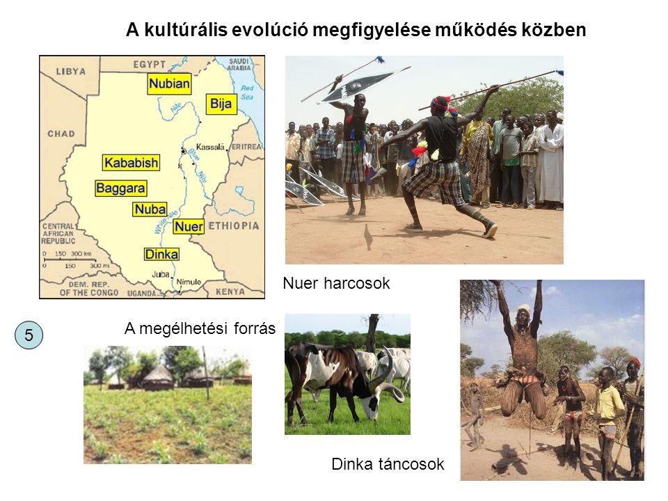 A kultúrális evolúció megfigyelése működés közben