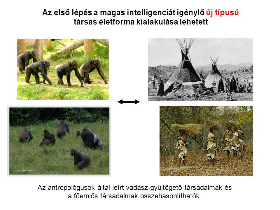 Az első lépés a magas intelligenciát igénylő új típusú társas életforma kialakulása lehetett