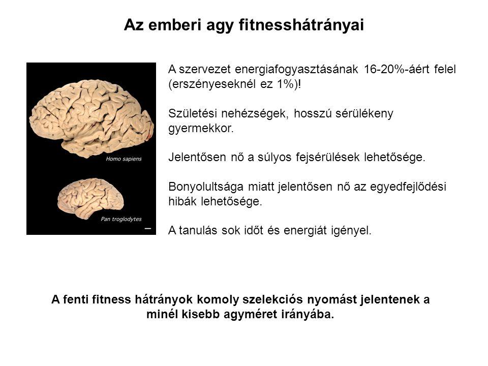 Az emberi agy fitnesshátrányai