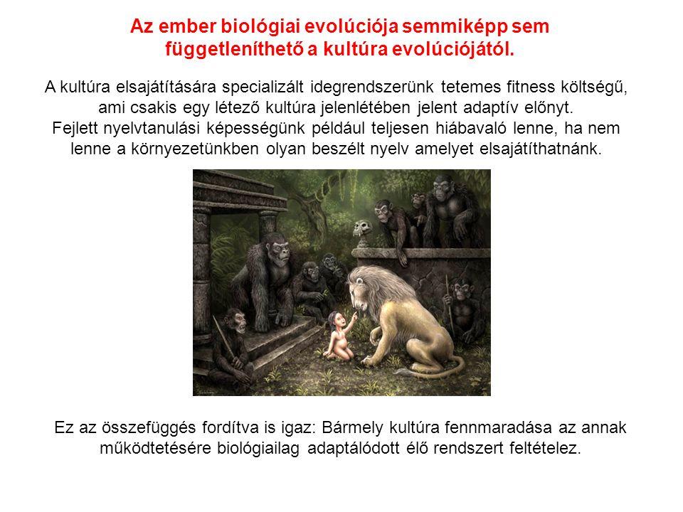 Az ember biológiai evolúciója semmiképp sem függetleníthető a kultúra evolúciójától.