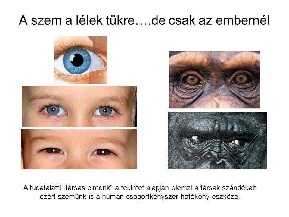 A szem a lélek tükre….de csak az embernél