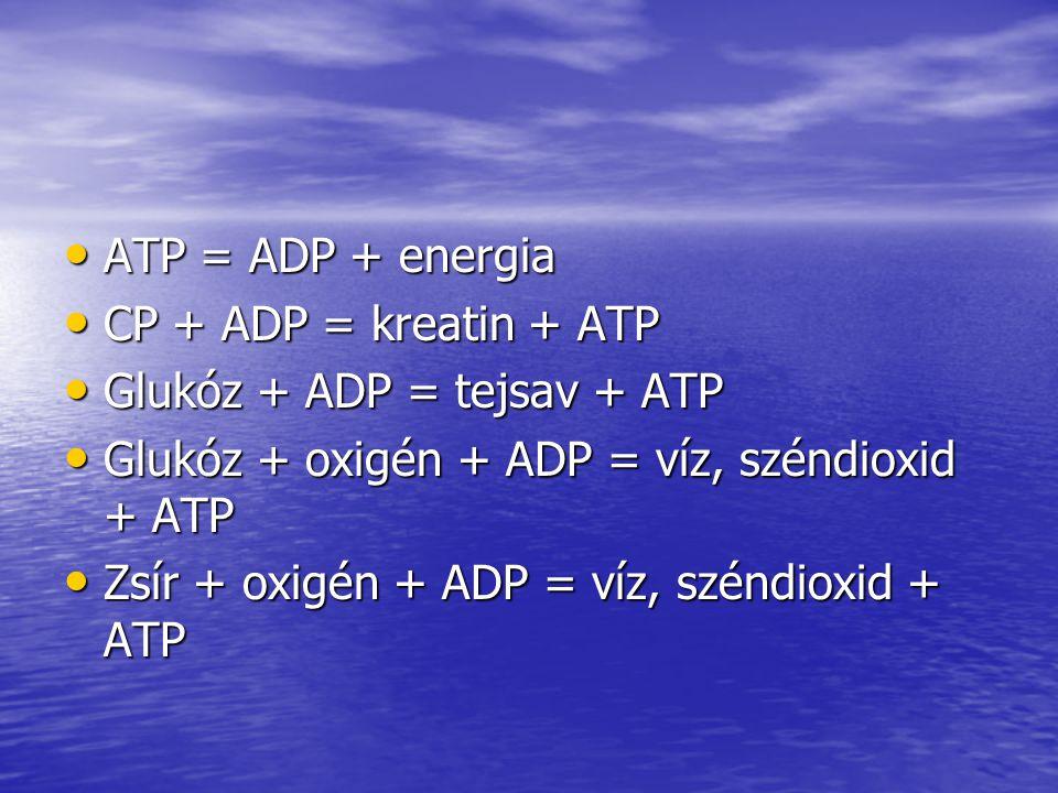 ATP = ADP + energia CP + ADP = kreatin + ATP. Glukóz + ADP = tejsav + ATP. Glukóz + oxigén + ADP = víz, széndioxid + ATP.