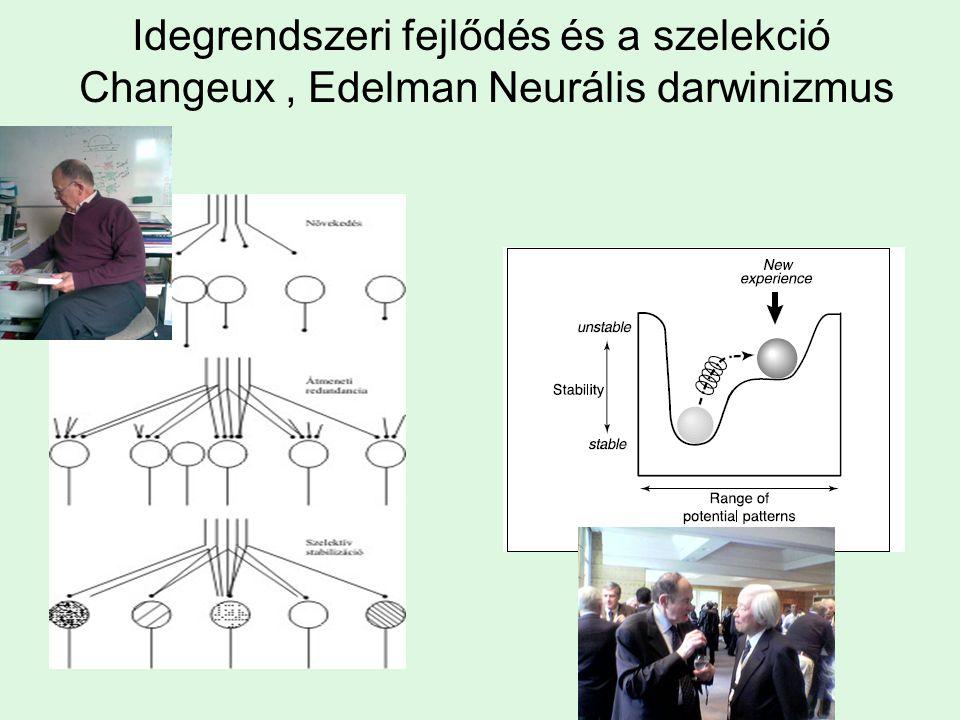 Idegrendszeri fejlődés és a szelekció Changeux , Edelman Neurális darwinizmus