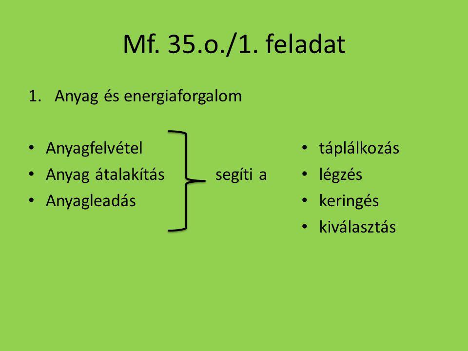 Mf. 35.o./1. feladat Anyag és energiaforgalom Anyagfelvétel