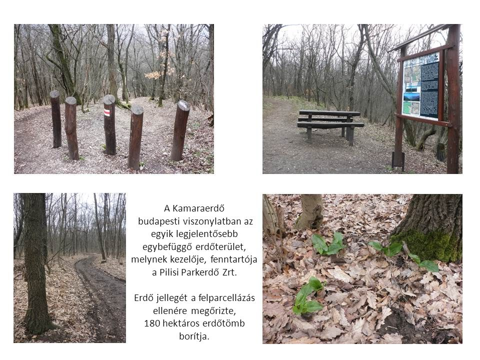 A Kamaraerdő budapesti viszonylatban az egyik legjelentősebb egybefüggő erdőterület, melynek kezelője, fenntartója.