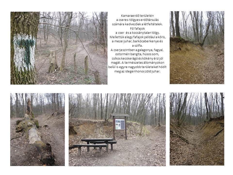 a cseres-tölgyes erdőtársulás számára kedvezőek a létfeltételek.