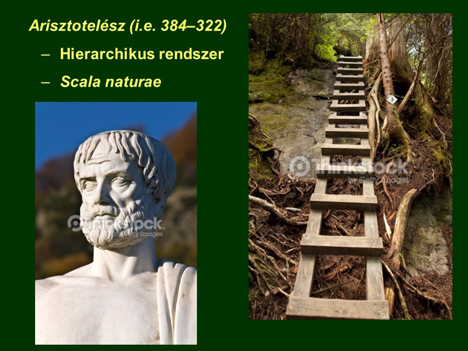 Arisztotelész (i.e. 384–322) Hierarchikus rendszer Scala naturae