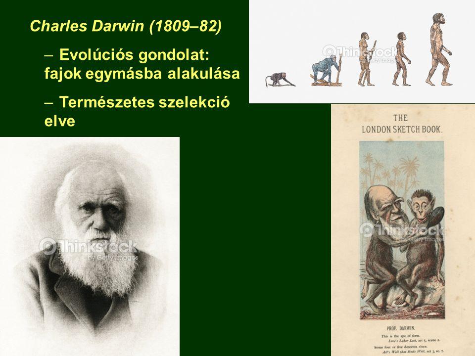 Charles Darwin (1809–82) Evolúciós gondolat: fajok egymásba alakulása Természetes szelekció elve