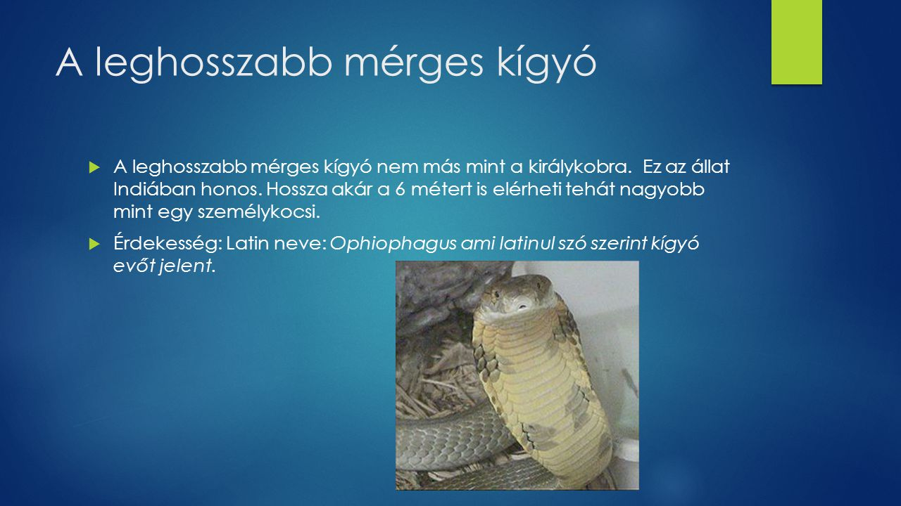 A leghosszabb mérges kígyó
