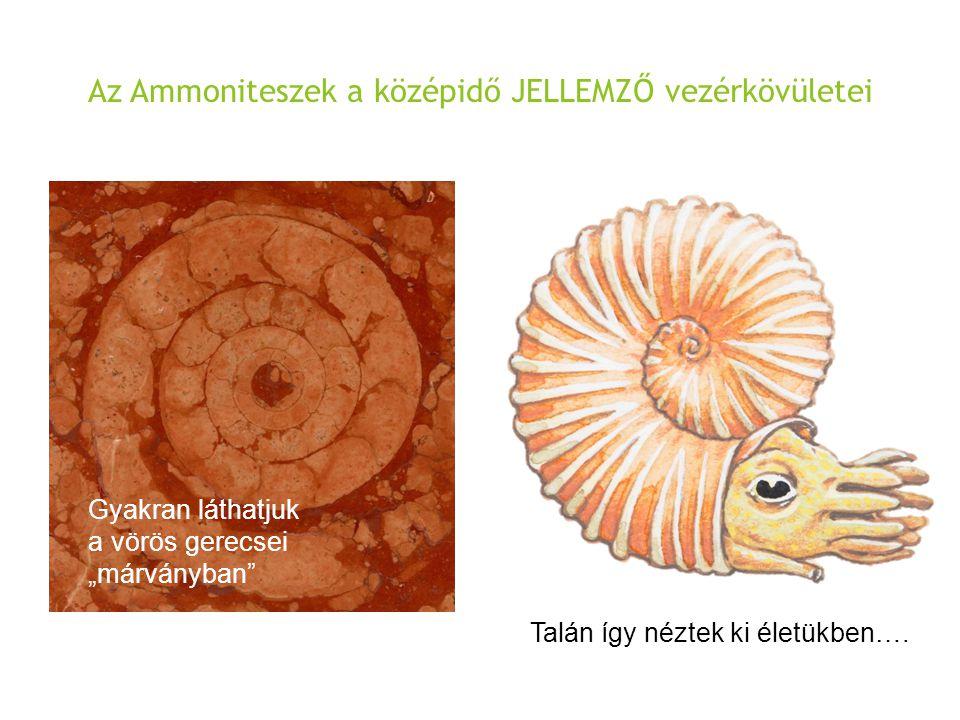 Az Ammoniteszek a középidő JELLEMZŐ vezérkövületei