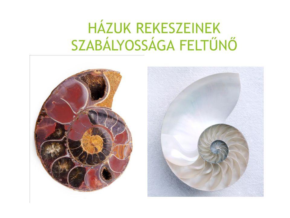 HÁZUK REKESZEINEK SZABÁLYOSSÁGA FELTŰNŐ