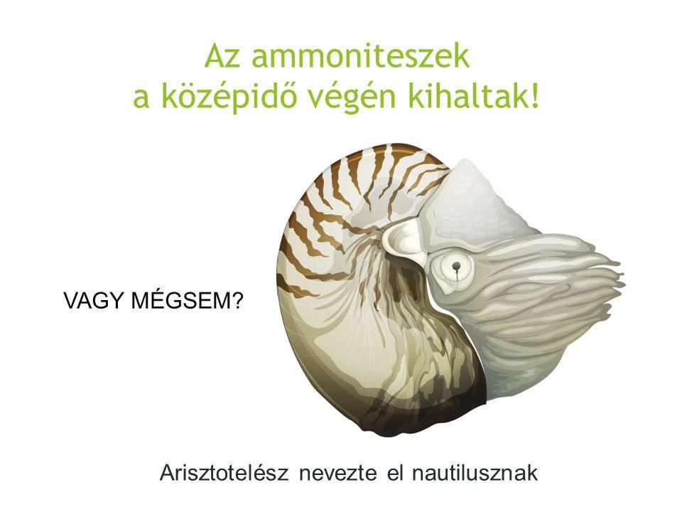 Az ammoniteszek a középidő végén kihaltak!