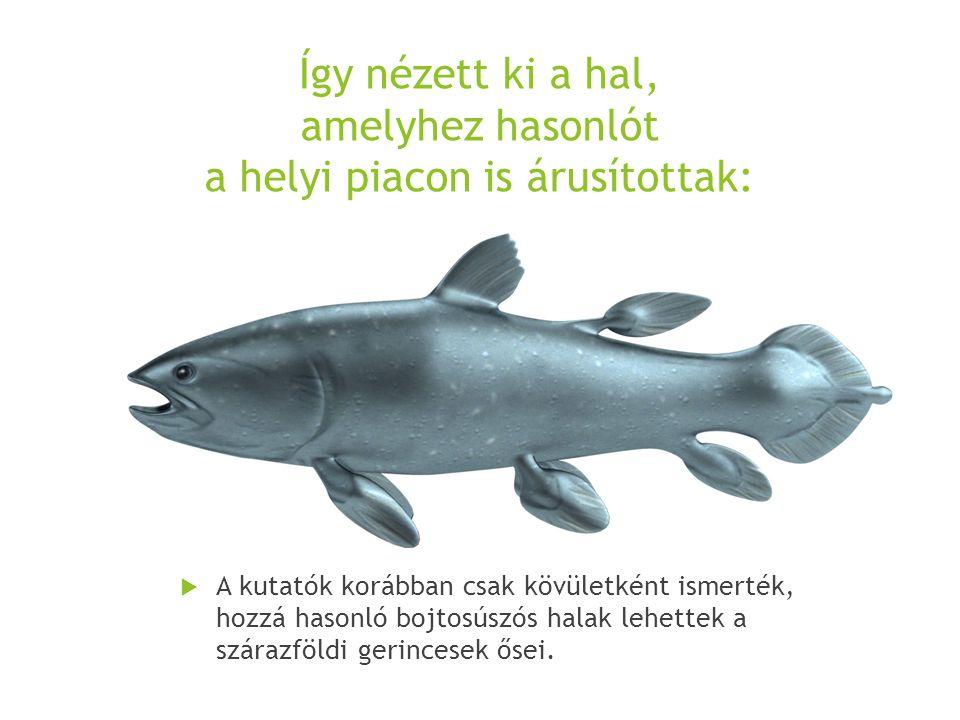 Így nézett ki a hal, amelyhez hasonlót a helyi piacon is árusítottak: