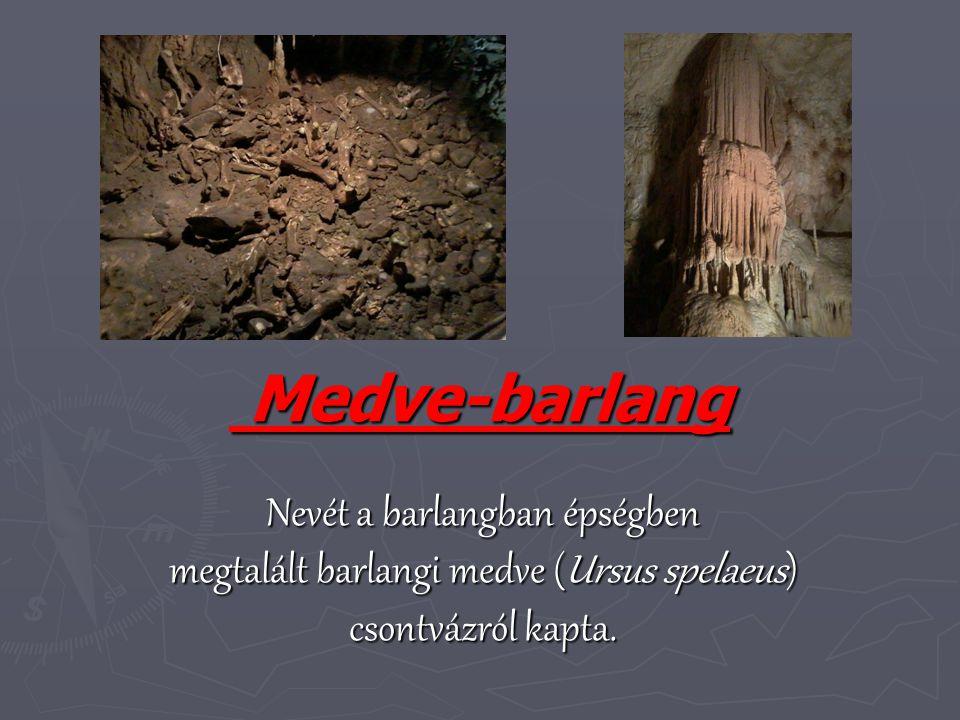 Medve-barlang Nevét a barlangban épségben megtalált barlangi medve (Ursus spelaeus) csontvázról kapta.