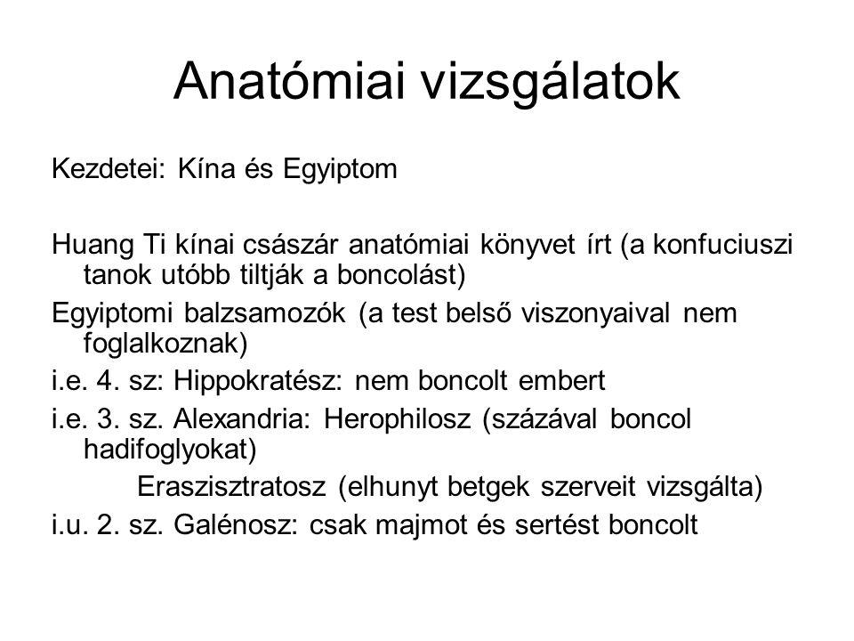 Anatómiai vizsgálatok