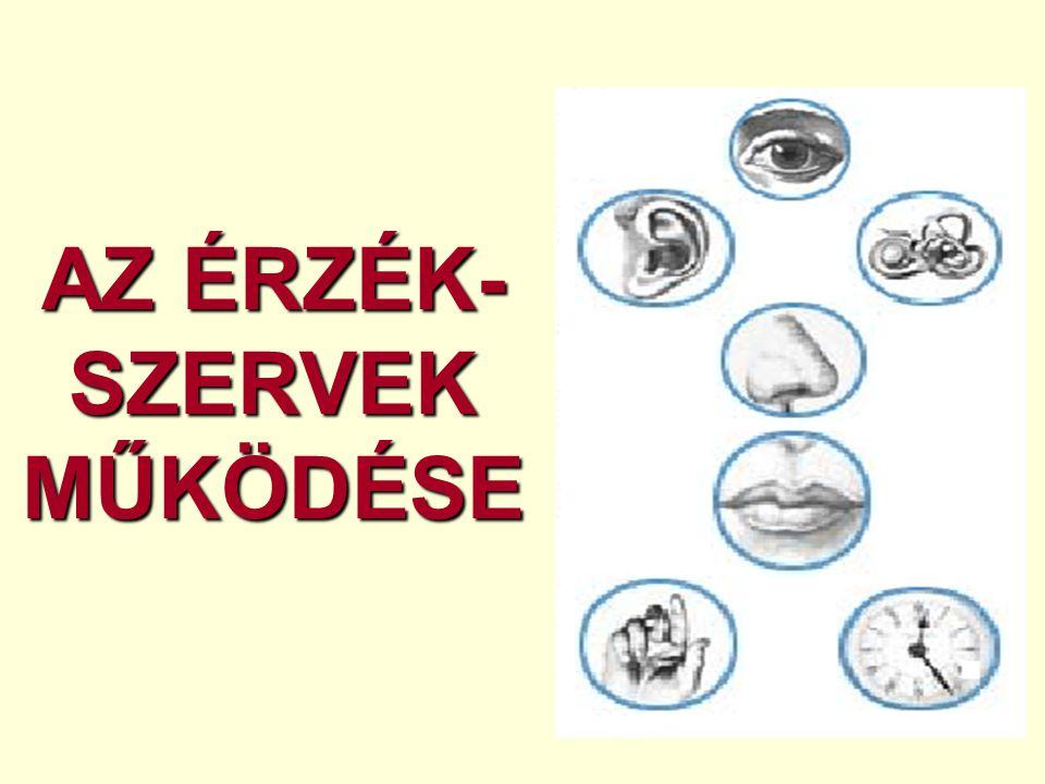 AZ ÉRZÉK-SZERVEK MŰKÖDÉSE