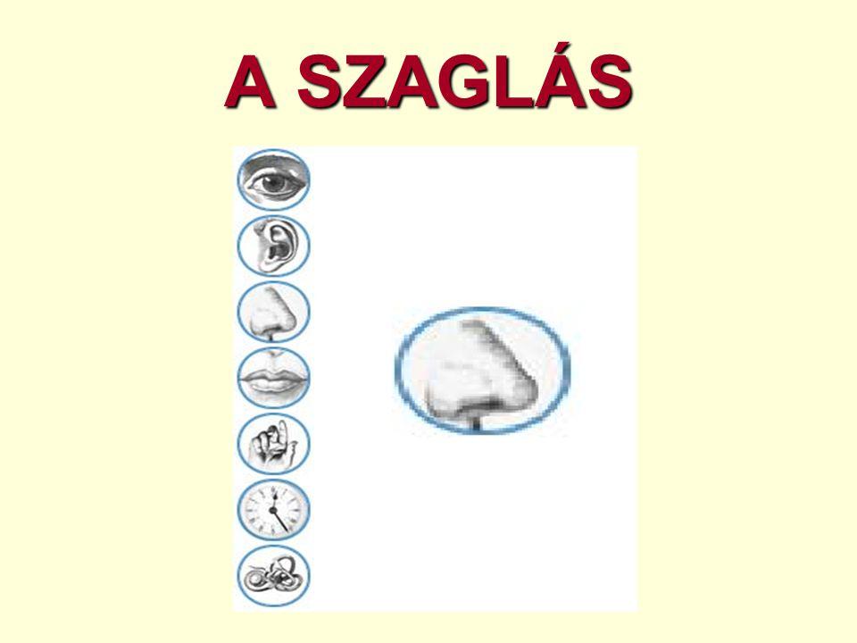 A SZAGLÁS