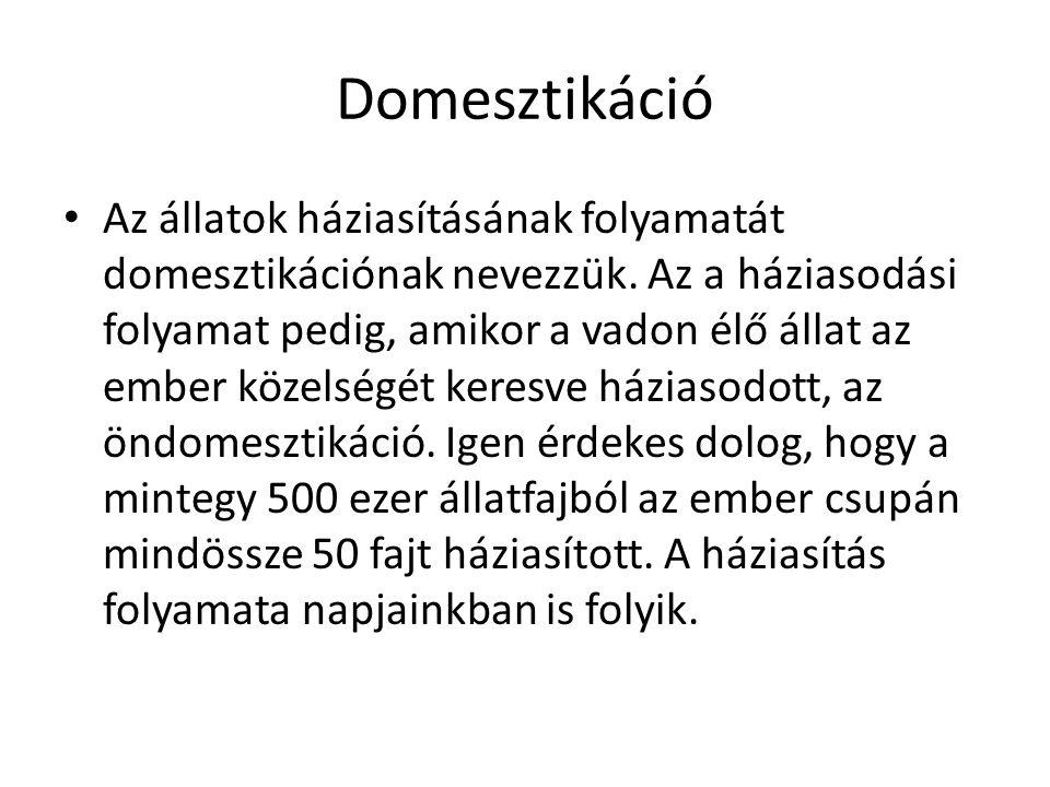 Domesztikáció