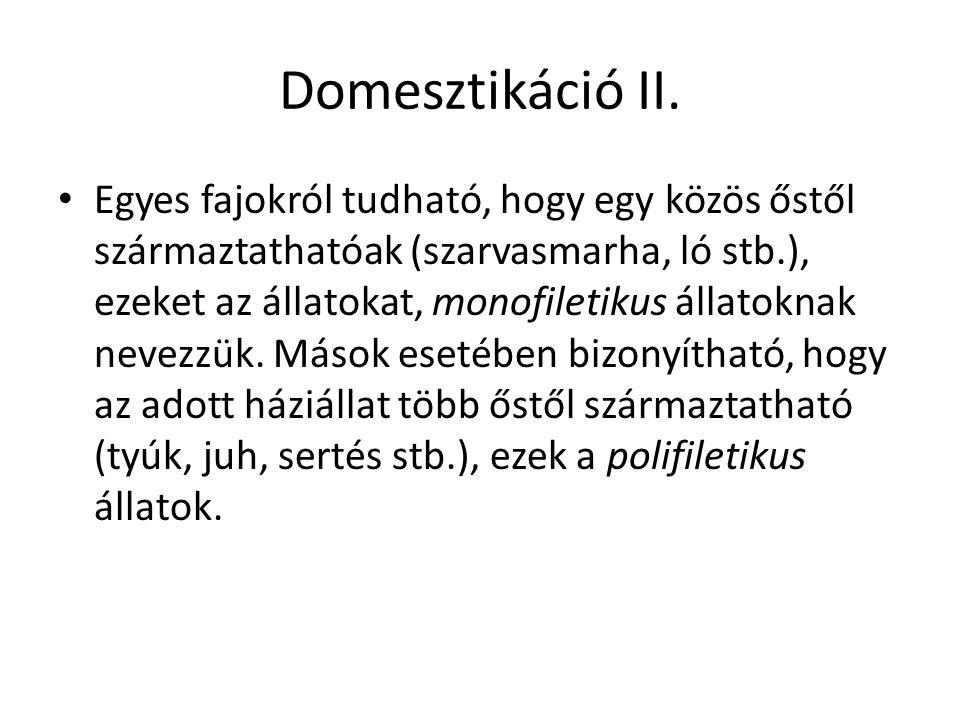 Domesztikáció II.