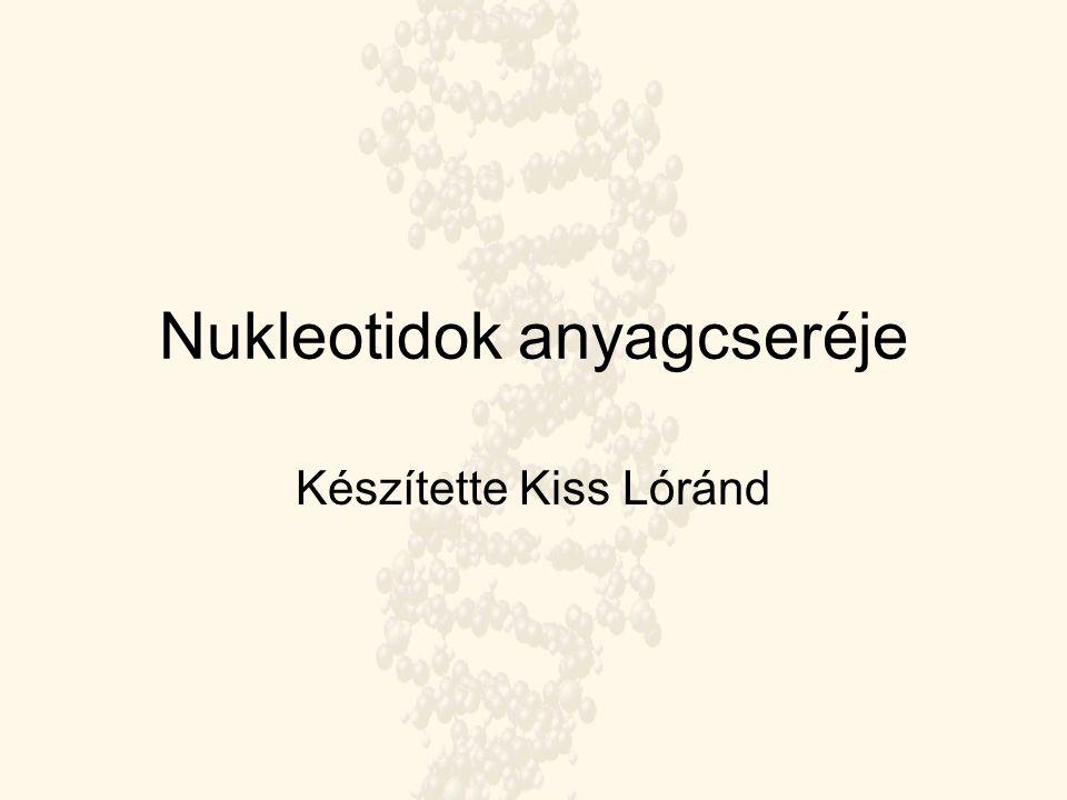 Nukleotidok anyagcseréje