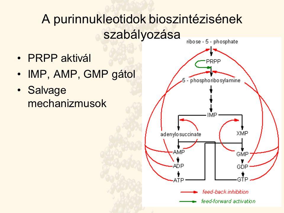 A purinnukleotidok bioszintézisének szabályozása