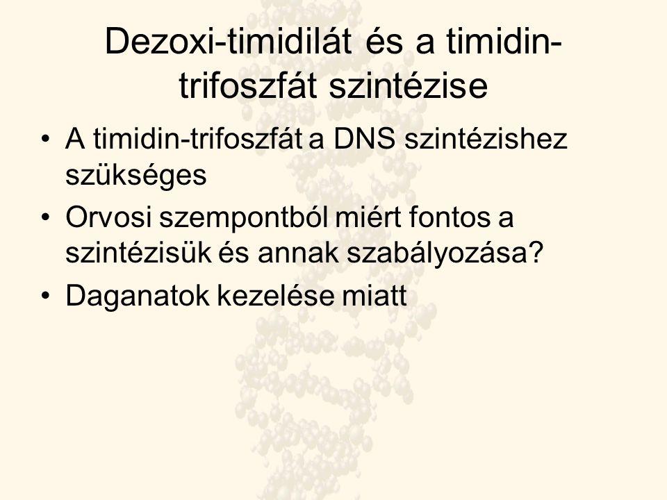 Dezoxi-timidilát és a timidin-trifoszfát szintézise