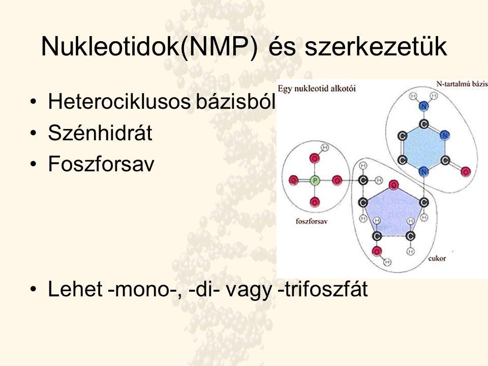 Nukleotidok(NMP) és szerkezetük