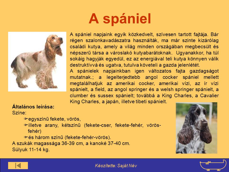A spániel