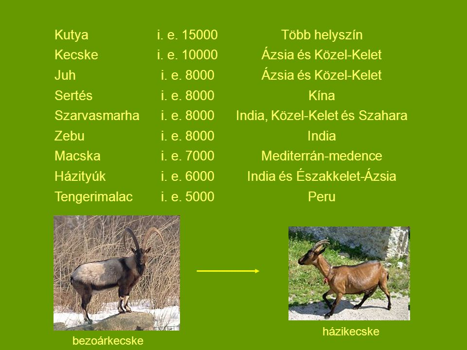 India, Közel-Kelet és Szahara Zebu India Macska i. e. 7000