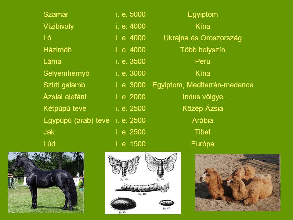 Ukrajna és Oroszország Háziméh Több helyszín Láma i. e. 3500 Peru