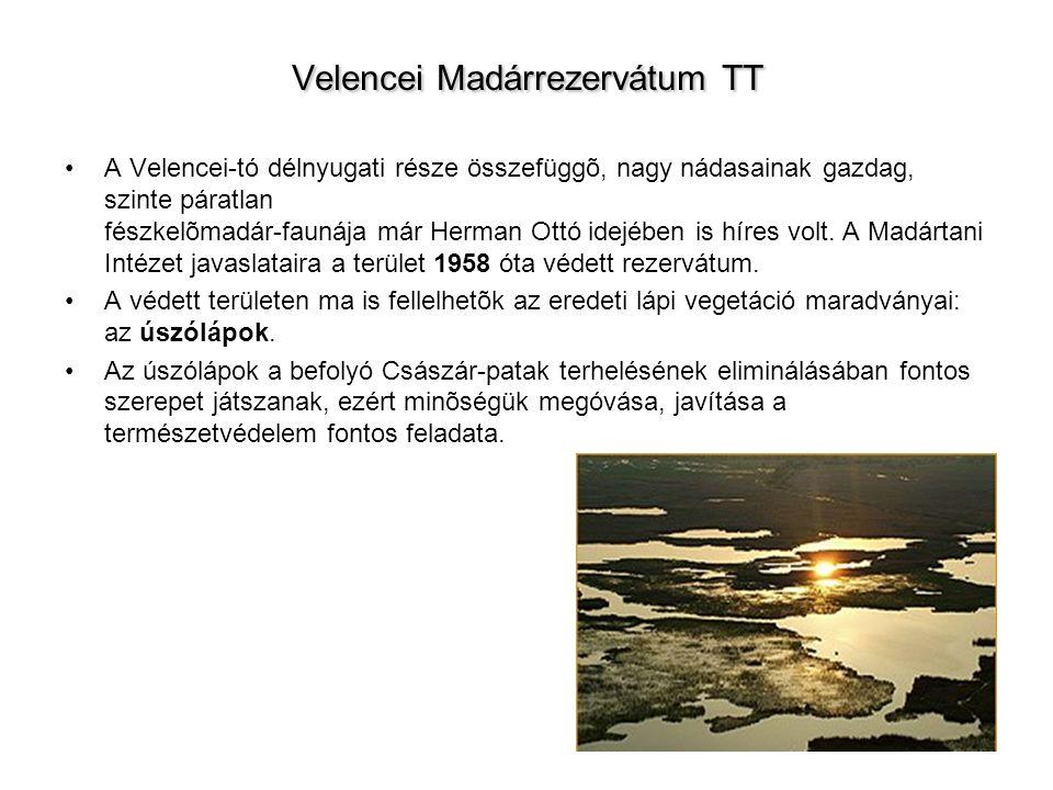 Velencei Madárrezervátum TT