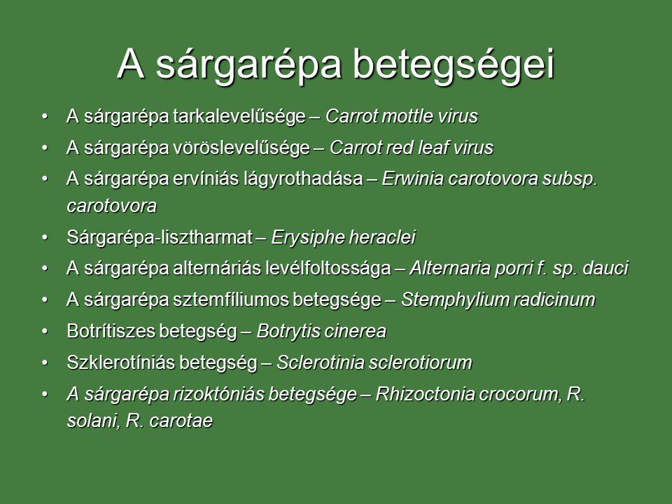 A sárgarépa betegségei